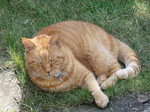 庭の芝生の上で寝転んでいる図。
