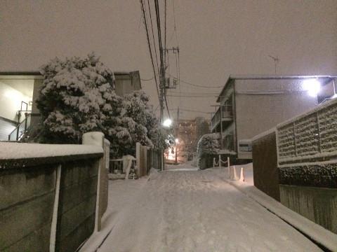 2月14日夕方、自宅近所で撮影