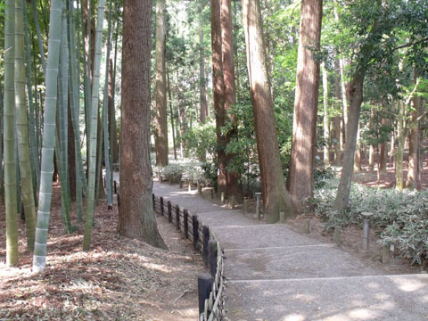 竹林と杉林が続く