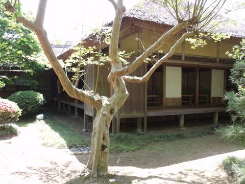 庭内にはツツジの他にサルスベリの木も