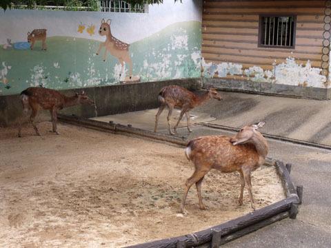 奈良公園ではおなじみのシカ