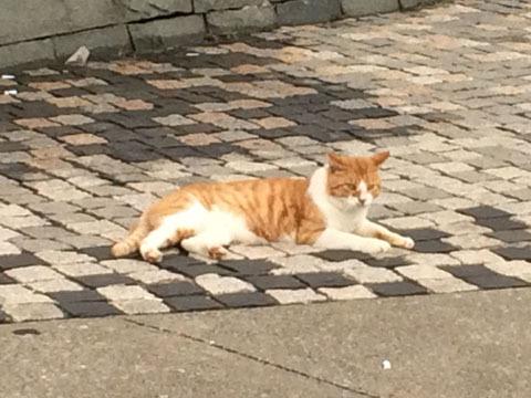 ネコが獲物を狙って待機中