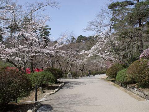弥彦公園の歩道