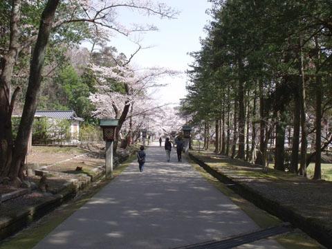 この桜並木も綺麗だった