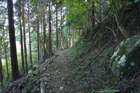 杉並木を抜ける