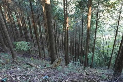 ここも見事な杉並木です