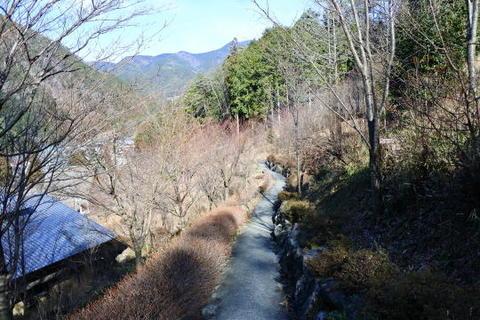 紅葉の里山の中を散策できる遊歩道