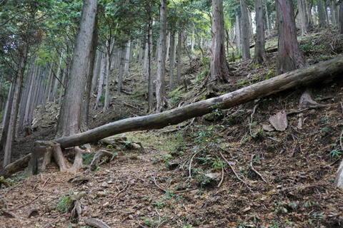 道を倒木が遮る