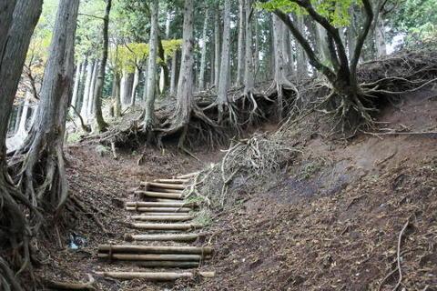 木の根元がかなり浸食されている