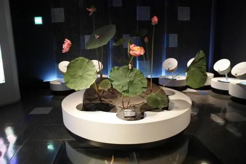 展示室には蓮の模型が展示