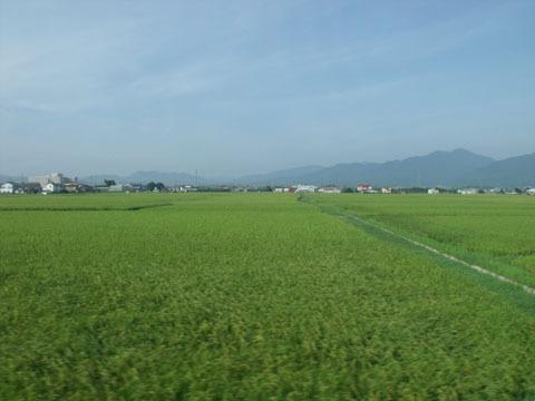見慣れた田園の風景
