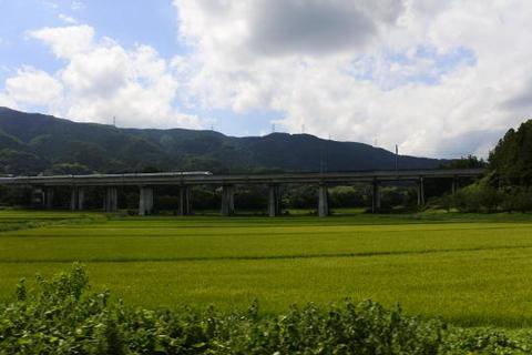田んぼの奥を新幹線が駆け抜けていく