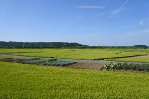 米どころならではの風景