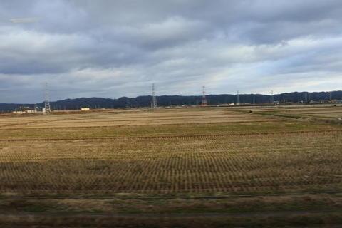 米どころの水田地帯を走行