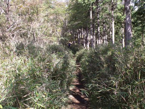 竹やぶの中を抜ける感じ