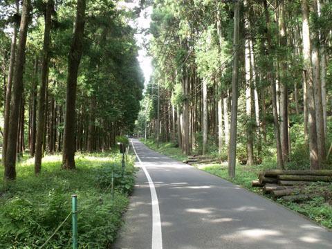 登山口までは車道が続く