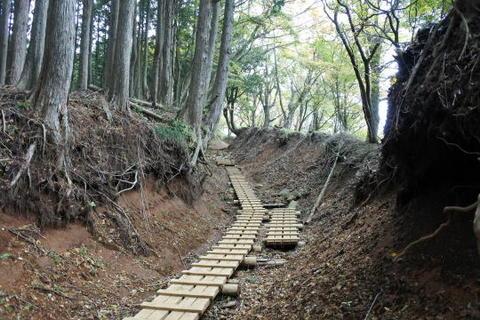 木製の歩道が整備された