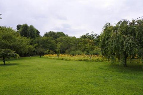 芝地の奥に黄色い花がみえますが…