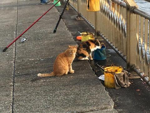 バケツの中の魚を漁っている猫w