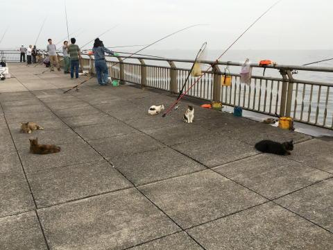 魚(エサ)目当ての猫が続々