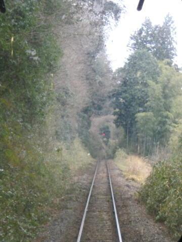 木のトンネルを抜ける
